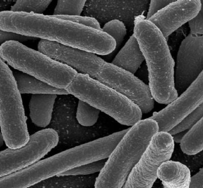 Vi khuẩn trú ngụ trong khăn mặt sẽ gây hại cho da của bạn